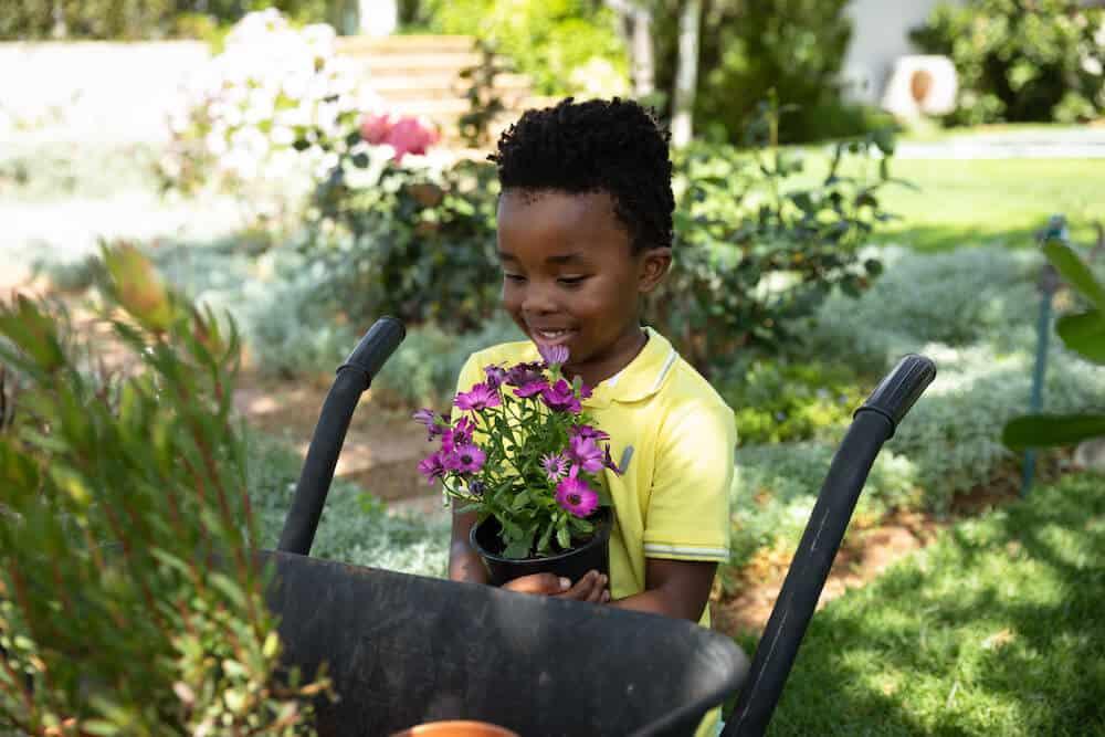 A preschool aged boy gardening, and preparing to plant purple flowers.